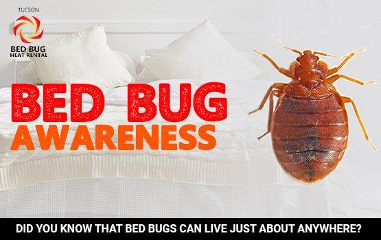 Bed Bug Awareness