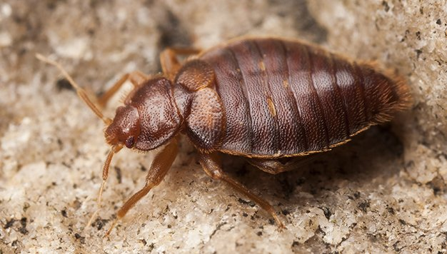 Tucson Bed Bug Heater Rental Best Bed Bug Treatment